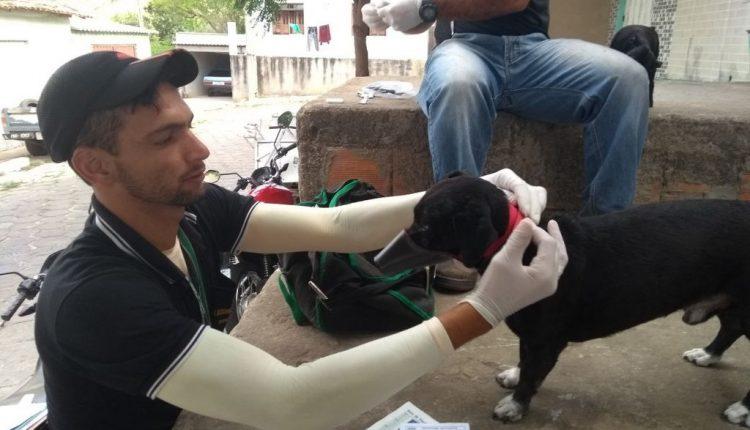 Prefeitura de Caetité realiza gratuitamente teste para detectar leishmaniose em cães