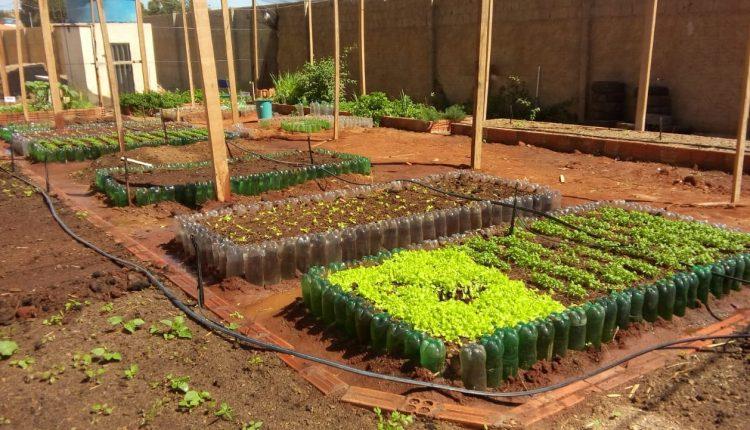 Colégios Zelinda e Nunila realizam Projeto Horta Escolar e Paisagismo Sustentável