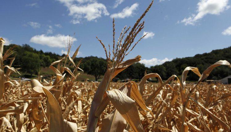 Garantia Safra: 2.077 agricultores caetiteenses recebem a primeira parcela a partir de 18 de março
