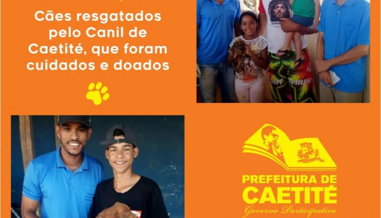 Prefeitura de Caetité está realizando importante ação voltada aos animais de rua da cidade