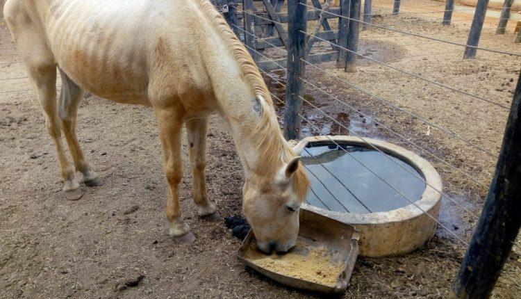 Prefeitura de Caetité promove o resgate e cuidado de equinos abandonados